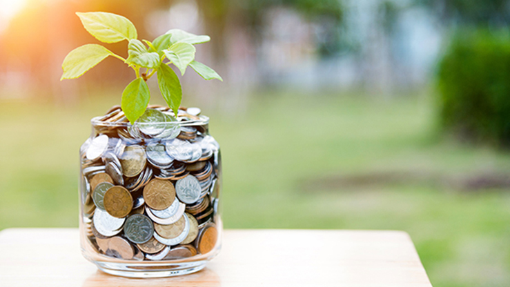money in a plant that is potted